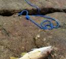南丫島釣行